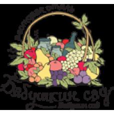 Бабушкин сад - Комплекс загородного отдыха